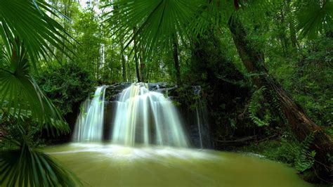 Waterfalls Inside The Palm Trees | HD Nature Wallpapers