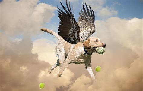 If Dogs Could Fly | Gardens For Goldens