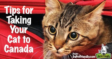 Tips for Traveling to Canada with Your Cat
