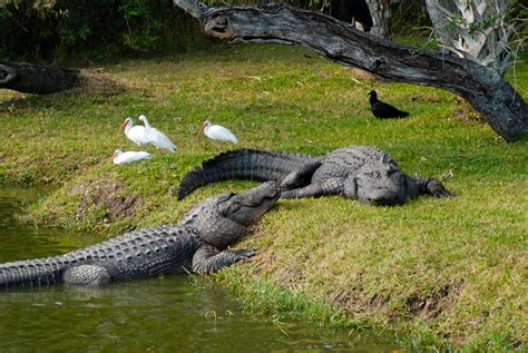 Natural Attractions in Florida | Florida Hikes!