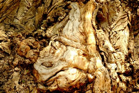 Free Images : nature, white, grain, trunk, formation, dry