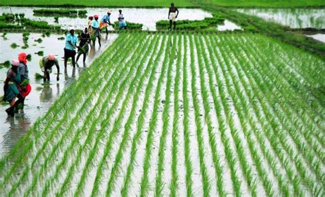 New crop insurance policies for farmers in Tamil Nadu