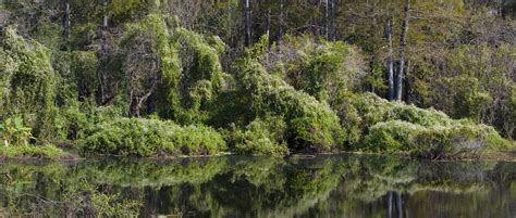 fort-myers-six-mile-cypress-slough-preserve - Cape Coral