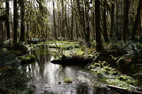 Visiting Quinault - Olympic National Park (U